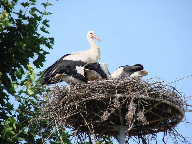 nid,vide,enfants,enfant,syndrome,vie,parents,maison,temps,ans,nid vide