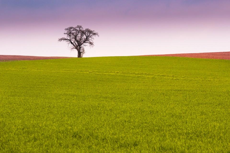 arbre solitaire photo par jamacab