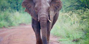 elephant 300x150 - 7 métaphores simples qui changeront votre façon de penser